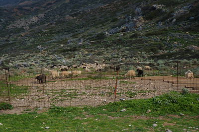 Goats and fences. Everywhere we went.