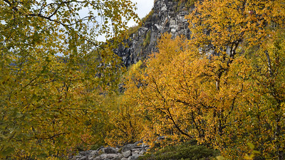 Most of the trek was above tree level except the beginning and end, rich in birch trees