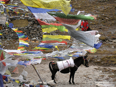 Prayer Flags on the Sinche La with pony, Bhutan Snowman Trek 2012