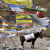 Prayer Flags on the Sinche La with pony, Bhutan Snowman Trek 2012