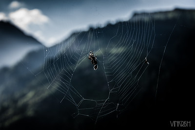 from a web-based life to watching spidey weave a web..
