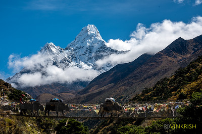 Mil$ view: Yaks get across as Ama Dablam towers in the background