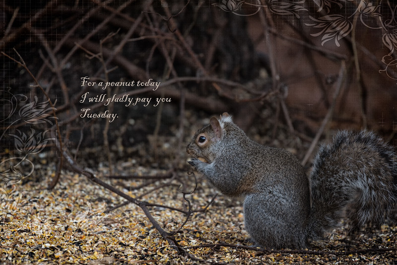 Wimpy the Squirrel