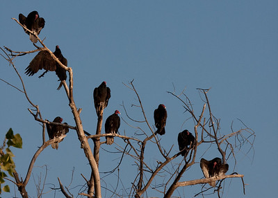What are the vultures waiting for?