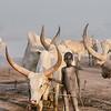 Little Mundari big Cattle