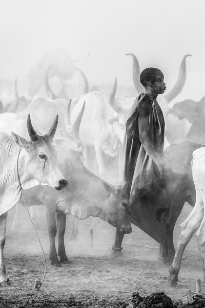 Ankole watusi cattle and their herder, Terekeka, S Sudan