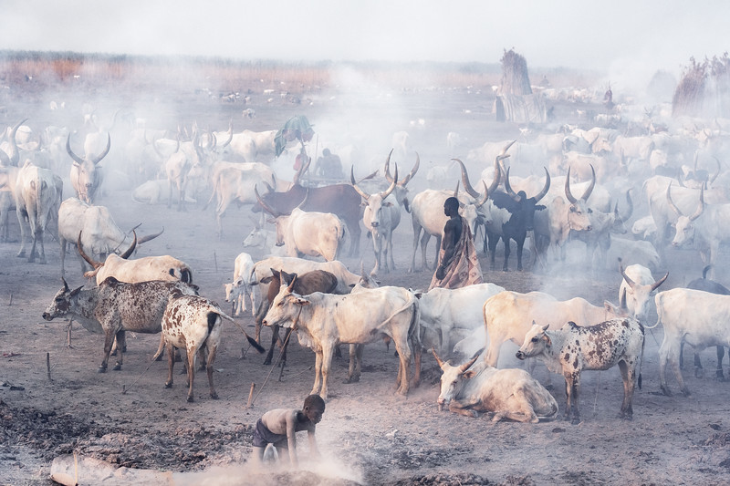 Dust and dirt and livestock