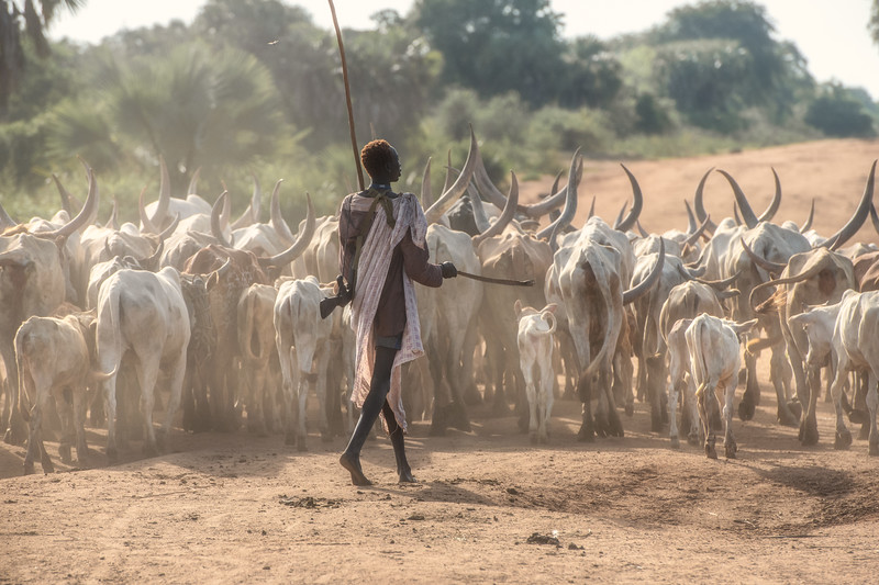 Dinka on the road