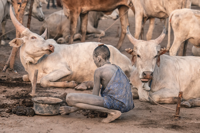 Devotion to the cattle