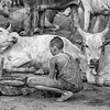 Devotion to the cattle in a Mundari camp