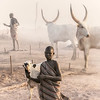 Mundari cattle work