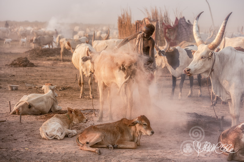 Life in the cattle camp