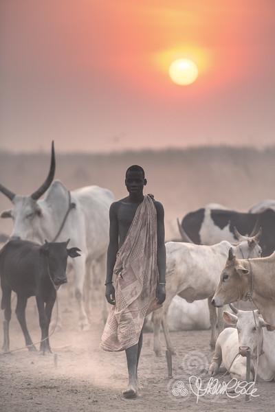Mundari with his cattle