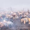 Cattle camp of the Mundari
