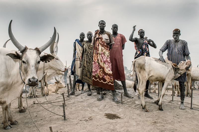 Dinka and their cattle