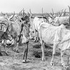 Mundari In the midst