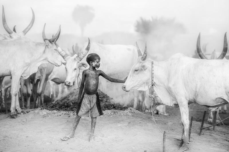 The bond betweem boy and cow, Dinka camp