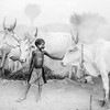 The bond betweem boy and cow, Dinka camp