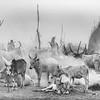 Life on the Nile, Mundari tribe