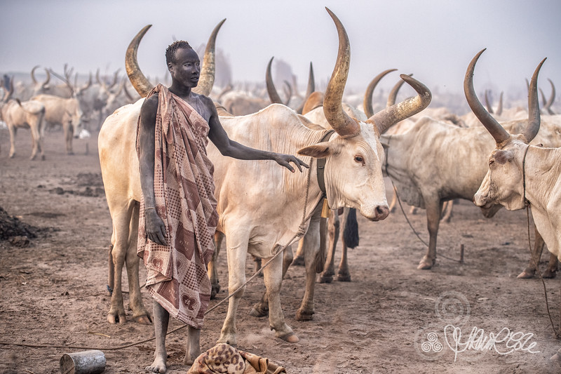 A man with his herd