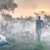 Dinka woman and cattle