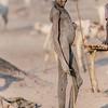 Young herder, Mundari