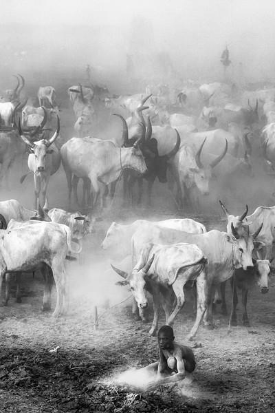 Ankole watusi  gathering in Mundari camp, White Nile