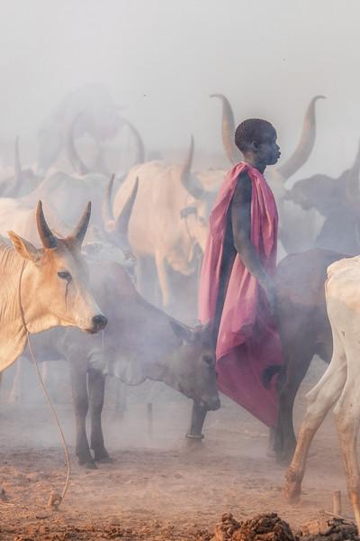 Ankole watusi cattle and their herder, Terekeka