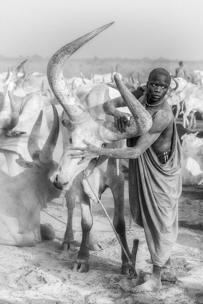 Mundari and their beasts, Terekeka