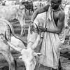 Devotion to the cattle, Terekeka