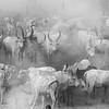 Mundari Cattle camp on the White Nile