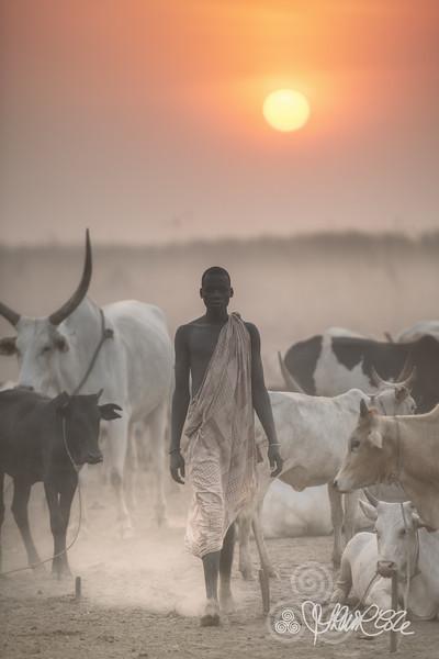 Cattle and the Mundari