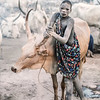 A bond between Mundari and Cow