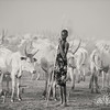 Mundari cattle care, Terekeka
