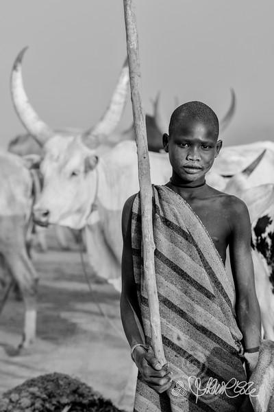 Mundari cattle care, Terekeka