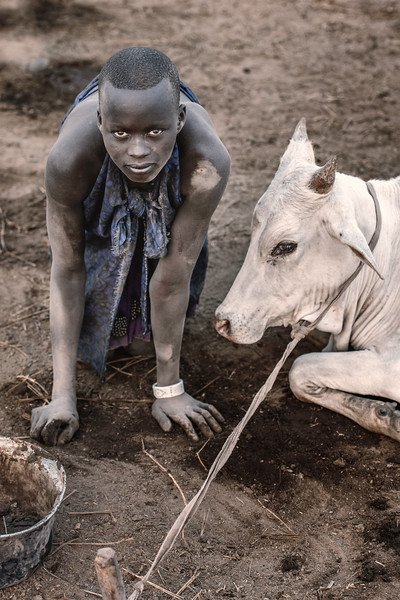 An integral part of Mundari life - collecting dung
