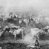 Mundari Cattle camp on the Nile