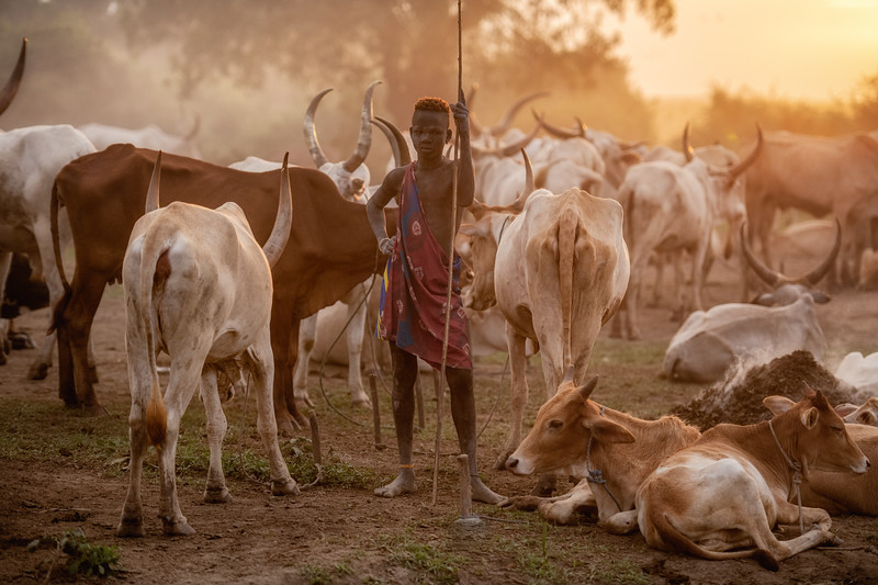Boy and his herd