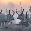 Mundari cattle camp at dusk