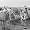 Standing with my herd, Terekeka