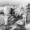 Cattle camp life in Terekeka
