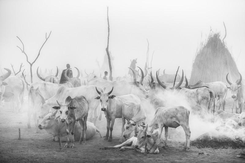 The blue hour in the Mundari cattle camp