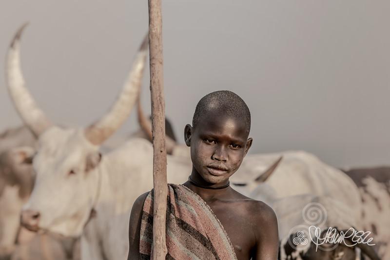 Mundari boy and his bull