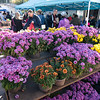 A beautiful day at the farmers market at Grand Army Plaza. Mums.