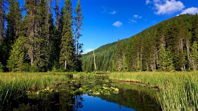 Trillium Lake Marsh