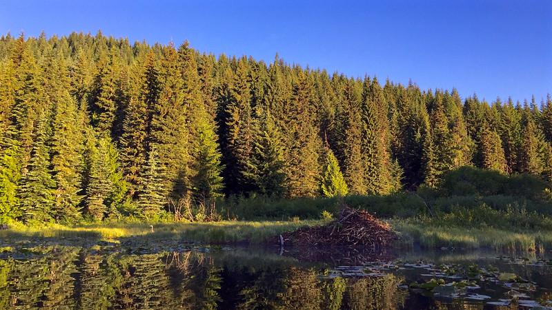 Beaver Lodge and Heron