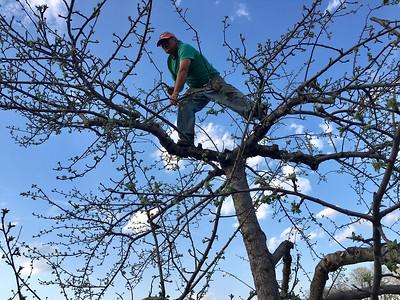Trimming trees in Billerica