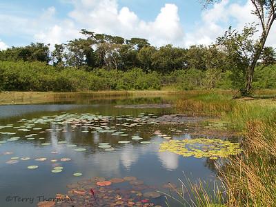 Trinidad and Tobago Habitat