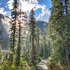 Tree's on the Canyon Lakes Creek trail in the Trinity Alps.