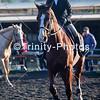20191027 - TCA - Equestrian Competition  096 Edit